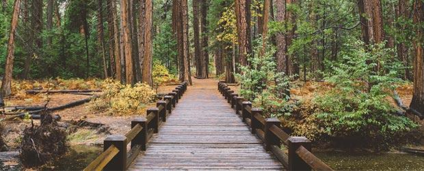 Træbro fører ind til tæt skov hvor der venter teambuilding.